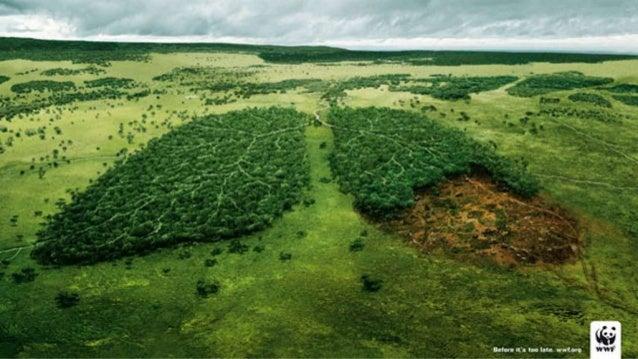 A importância da floresta em pé    Slide 3