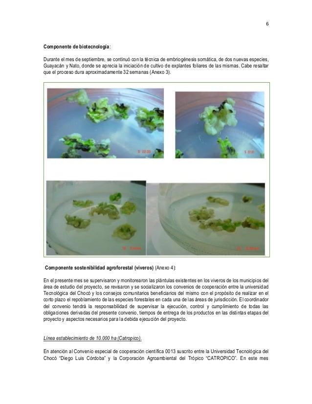 Informe Técnico Nº 16 Proyecto Maderas Chocó, septiembre-2016 APLICAC…