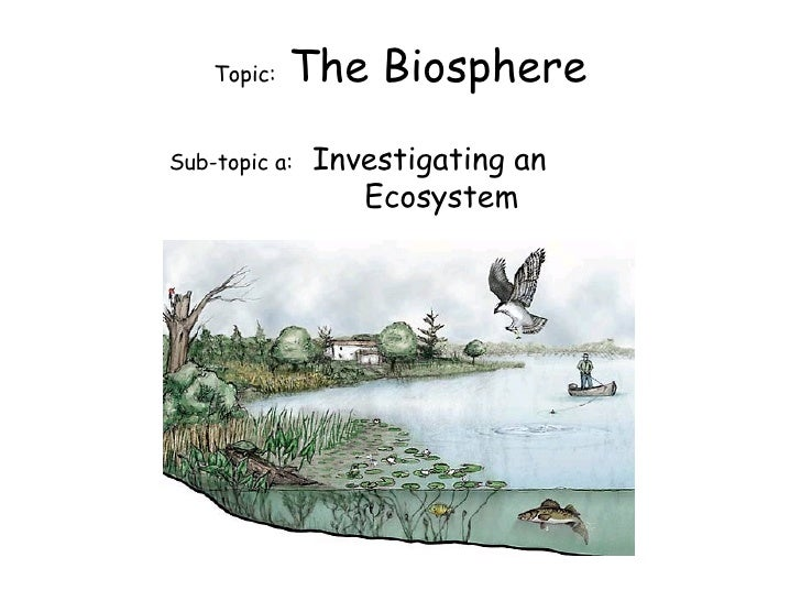 Topic:  The Biosphere Sub-topic a:  Investigating an  Ecosystem