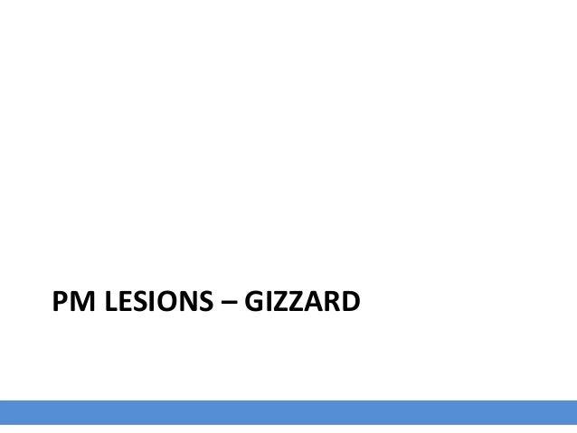 PM LESIONS – TRACHEA