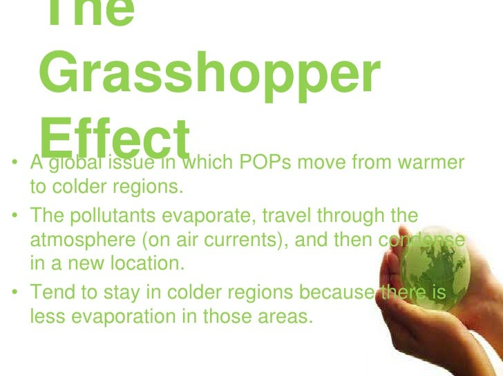 The Grasshopper Effect<br />A global issue in which POPs move from warmer to colder regions. <br />The pollutants evaporat...