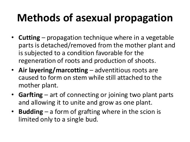 Asexual propagation marcotting procedure