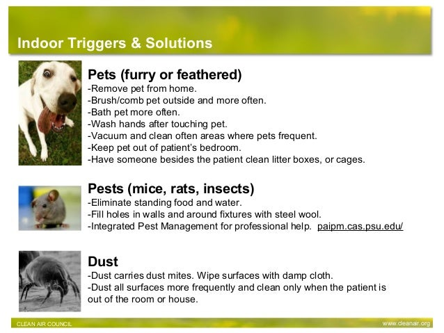 Pets (furry or feathered) -Remove pet from home. -Brush/comb pet outside and more often. -Bath pet more often. -Wash hands...