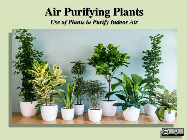 Air Purifying Plants on spices names, grass names, berries names, wildflowers names, veggies names, plants names, pets names, design names, garden names, cacti names, photography names, nuts names, furniture names, weather names, insects names, ornamental grasses names, herbs names, leaves names, lawn care names, pottery names,