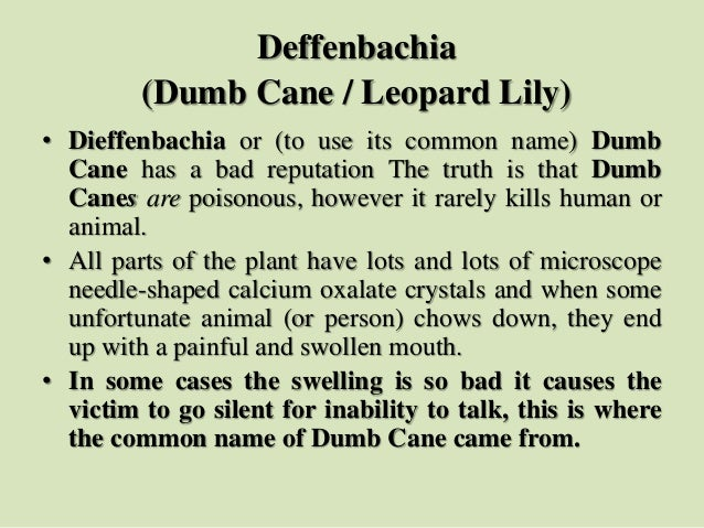 Deffenbachia (Dumb Cane / Leopard Lily) • Dieffenbachia or (to use its common name) Dumb Cane has a bad reputation The tru...