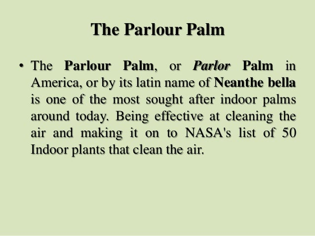 The Parlour Palm • The Parlour Palm, or Parlor Palm in America, or by its latin name of Neanthe bella is one of the most s...