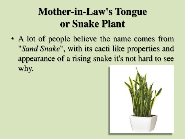 """Mother-in-Law's Tongue or Snake Plant • A lot of people believe the name comes from """"Sand Snake"""", with its cacti like prop..."""