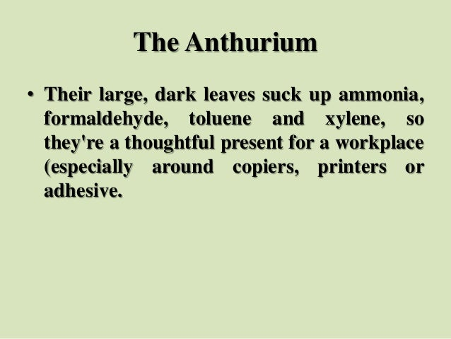 The Anthurium • Their large, dark leaves suck up ammonia, formaldehyde, toluene and xylene, so they're a thoughtful presen...