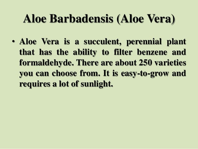 Aloe Barbadensis (Aloe Vera) • Aloe Vera is a succulent, perennial plant that has the ability to filter benzene and formal...