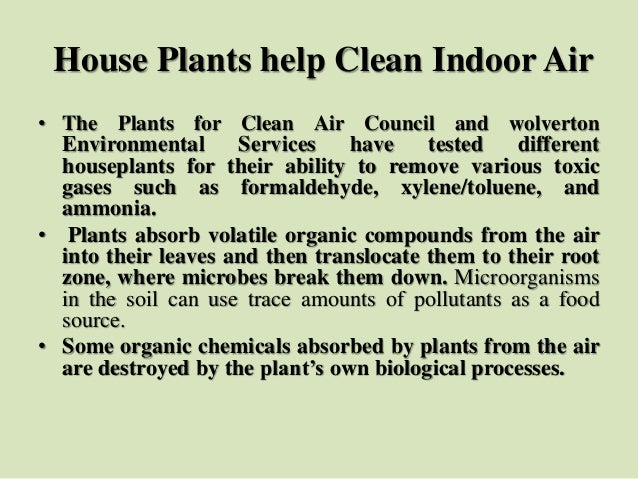 House Plants help Clean Indoor Air • The Plants for Clean Air Council and wolverton Environmental Services have tested dif...