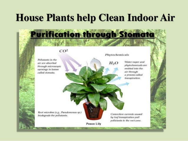 endearing house plants types. House Plants help Clean Indoor Air  Purifying