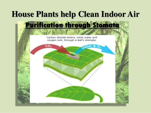 House Plants help Clean Indoor Air