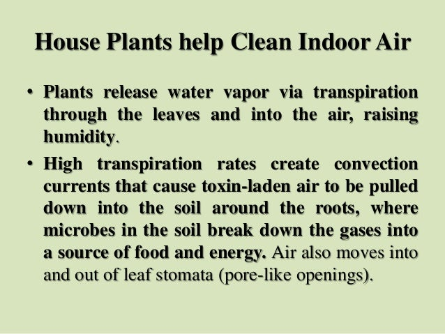 House Plants help Clean Indoor Air • Plants release water vapor via transpiration through the leaves and into the air, rai...