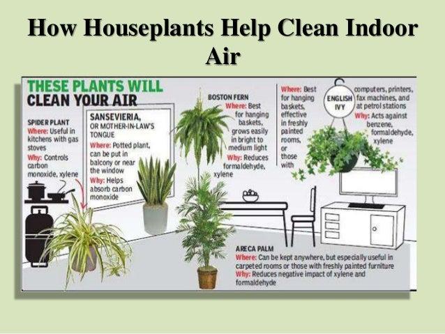 How Houseplants Help Clean Indoor Air