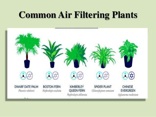 Common Air Filtering Plants