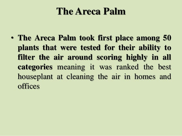 The Areca Palm • The Areca Palm took first place among 50 plants that were tested for their ability to filter the air arou...