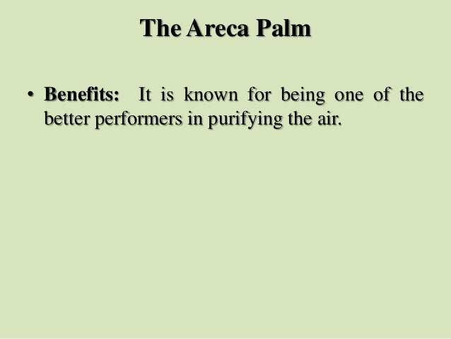 The Areca Palm • Benefits: It is known for being one of the better performers in purifying the air.