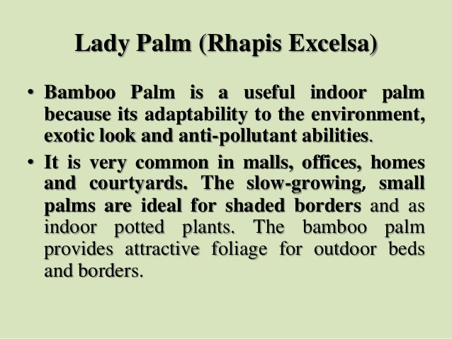 Lady Palm (Rhapis Excelsa) • Bamboo Palm is a useful indoor palm because its adaptability to the environment, exotic look ...