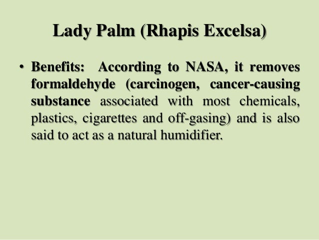 Lady Palm (Rhapis Excelsa) • Benefits: According to NASA, it removes formaldehyde (carcinogen, cancer-causing substance as...