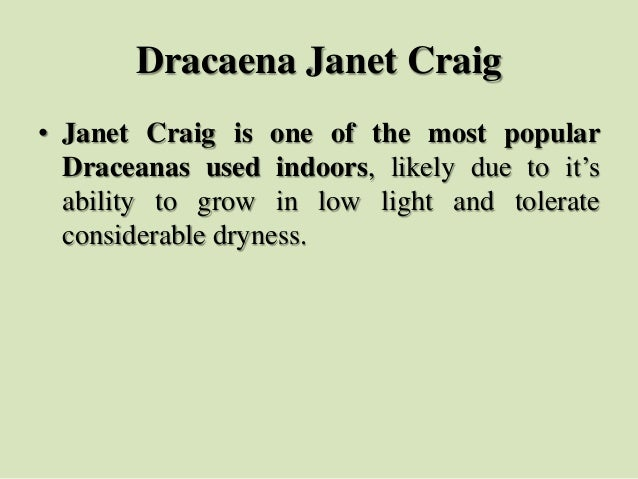 Dracaena Janet Craig • Janet Craig is one of the most popular Draceanas used indoors, likely due to it's ability to grow i...