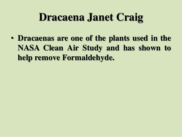 Dracaena Janet Craig • Dracaenas are one of the plants used in the NASA Clean Air Study and has shown to help remove Forma...