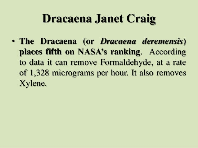Dracaena Janet Craig • The Dracaena (or Dracaena deremensis) places fifth on NASA's ranking. According to data it can remo...