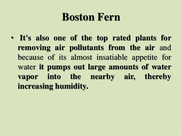 Boston Fern • It's also one of the top rated plants for removing air pollutants from the air and because of its almost ins...