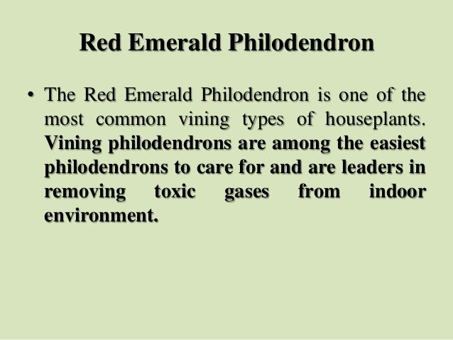 Red Emerald Philodendron • The Red Emerald Philodendron is one of the most common vining types of houseplants. Vining phil...