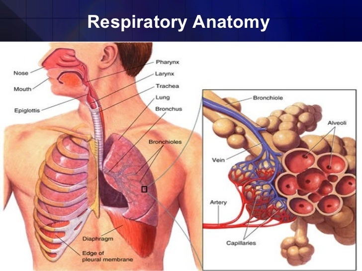 What does P0.1 mean? - Definition of P0.1 - P0.1 stands for Airway ...
