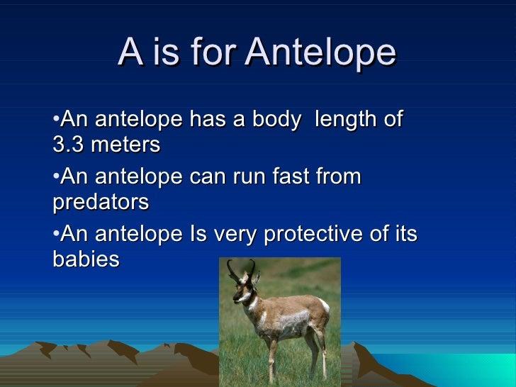 A is for Antelope <ul><li>An antelope has a body  length of 3.3 meters </li></ul><ul><li>An antelope can run fast from pre...