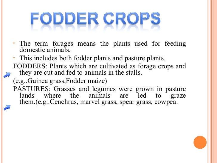 <ul><li>The term forages means the plants used for feeding domestic animals. </li></ul><ul><li>This includes both fodder p...