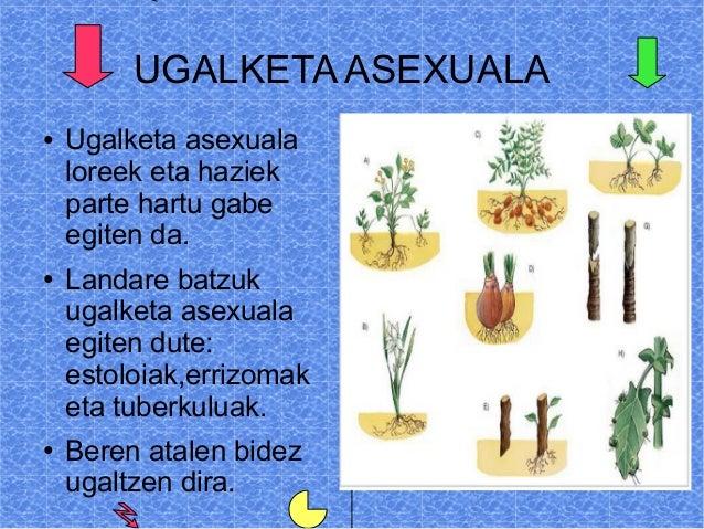 Ugalketa sexuala