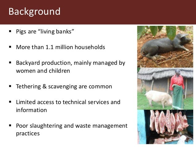"""Background  Pigs are """"living banks""""  More than 1.1 million households  Backyard production, mainly managed by women and..."""