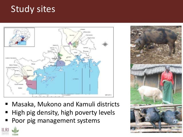 Study sites  Masaka, Mukono and Kamuli districts  High pig density, high poverty levels  Poor pig management systems