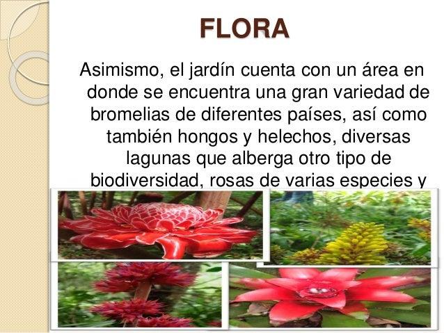 Jardin botanico paisajismo for Hongos en las plantas de jardin