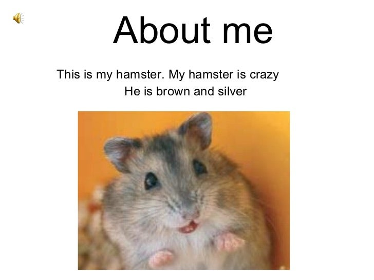 About me This is my hamster. My hamster is crazy He is brown and silver