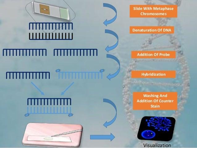 Advanced Techniques In Molecular Cytogenetics Karyotyping, FISH, CGH,…