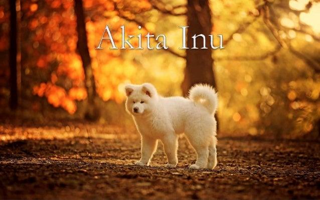 http://fauna-flora.gportal.hu http://www.ppsparadicsom.net