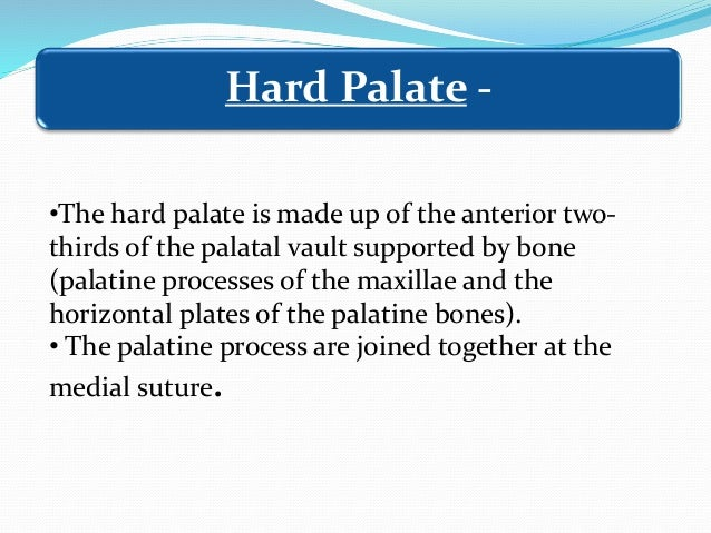 Gland tissueAdipose tissue Anterolateral part of the hard palate, with abundant adipose tissue Posterolateral part of the ...