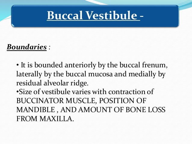 • Boundaries of posterior palatal seal area – i. Anteriorly – Anterior vibrating line ii. Posteriorly - Posterior vibratin...