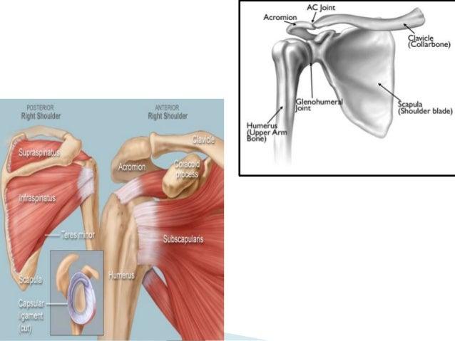 Terrific Shoulder Dislocation Orthopedics Glenohumeral Dislocation And Man Wiring Digital Resources Instshebarightsorg