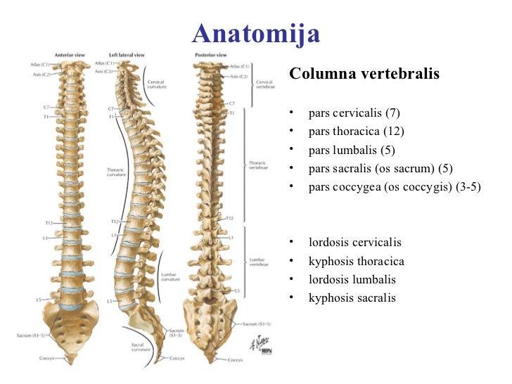 Akūtas sāpes mugurā Slide 2