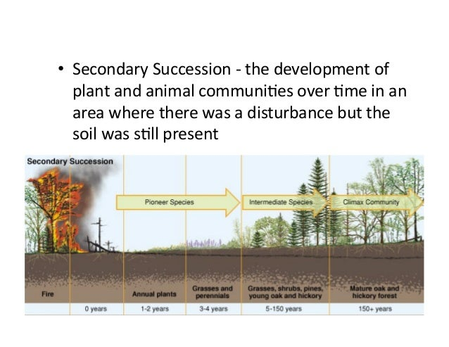Unit 6 Water and Succession review answer key – Primary and Secondary Succession Worksheet