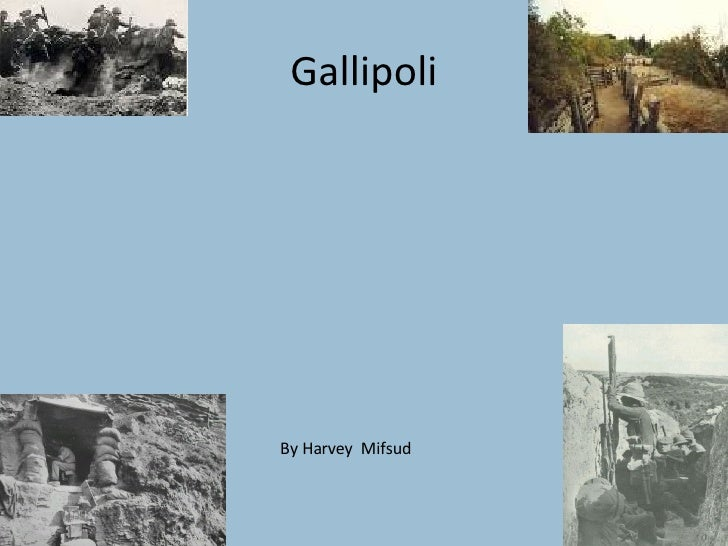 Gallipoli By Harvey  Mifsud