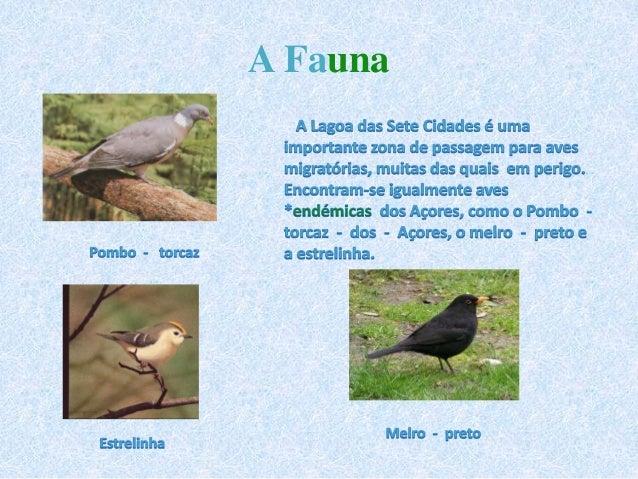 Resultado de imagem para 7 cidades aves açores