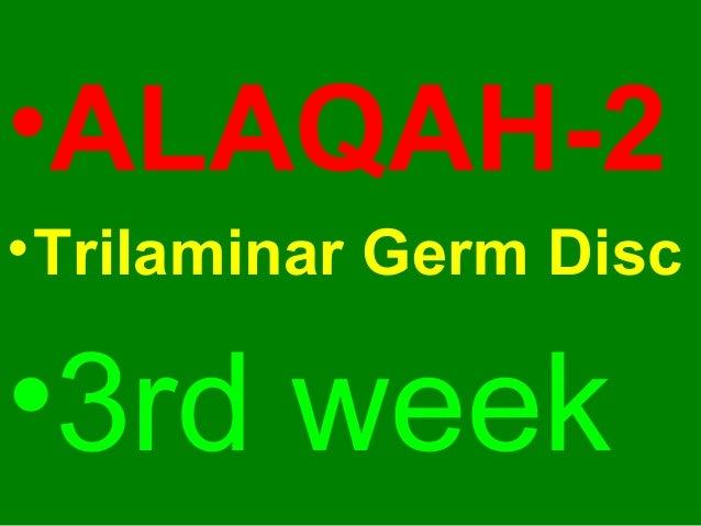 •ALAQAH-2 •Trilaminar Germ Disc •3rd week