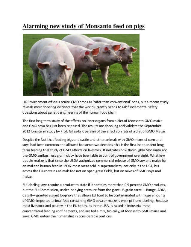 Alarming new study of Monsanto feed on pigsUK Environment officials praise GMO crops as 'safer than conventional' ones, bu...