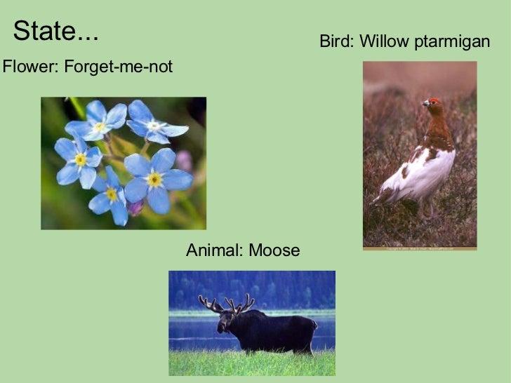 State...  Flower: Forget-me-not Bird: Willow ptarmigan Animal: Moose