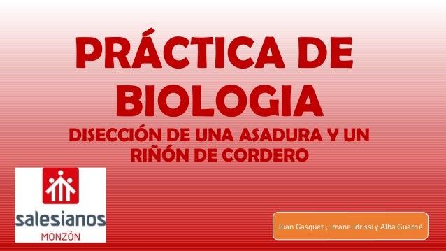 PRÁCTICA DE BIOLOGIA DISECCIÓN DE UNA ASADURA Y UN RIÑÓN DE CORDERO Juan Gasquet , Imane Idrissi y Alba Guarné
