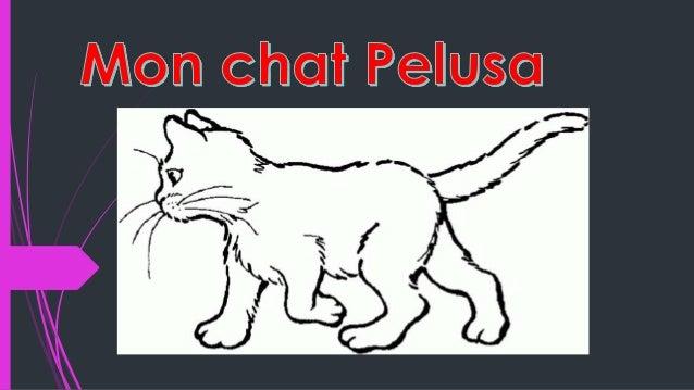 Mon chat s'appelle Pelusa, il a 4 mois.Elle est blanche, belle et un amour de chat. Elle aime le poison, la viande et la n...